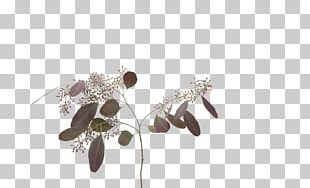 Cut Flowers Berry Red Shades Of Orange PNG