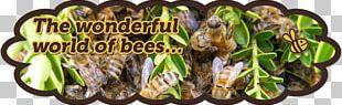 Honey Bee Bee Pollen Worker Bee Beehive PNG