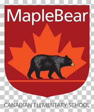 Maple Bear Canadian School Education Pre-school Kindergarten PNG
