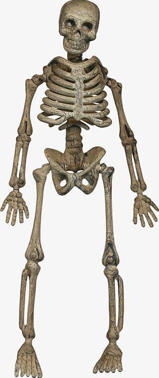 Halloween Skeleton Skull PNG