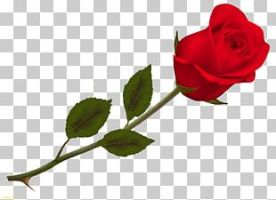 Valentine's Day Rose Propose Day SMS PNG