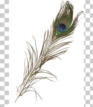 Feather Asiatic Peafowl Iridescence PNG