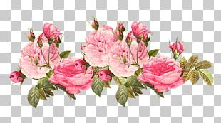Flower Vintage Clothing Centifolia Roses PNG