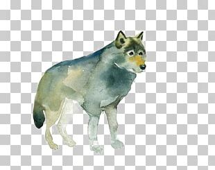 Gray Wolf Red Fox Watercolor Painting Drawing PNG