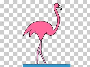 Water Bird Vertebrate Crane Beak PNG