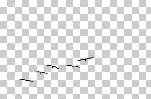 Bird Flight Gulls Brown Pelican Flock PNG