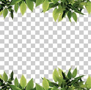 Green Leaf Computer File PNG