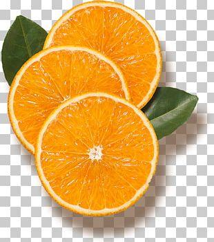Orange Juice Lake Wales Bitter Orange Tangerine PNG