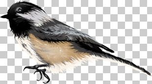 Beak Finches Fauna Feather Wildlife PNG