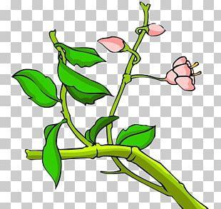 Floral Design Twig Leaf Plant Stem Green PNG