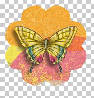 Paper Craft Butterfly Greeting & Note Cards PNG