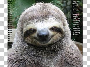 Sloth Cat Dog Funny Animal PNG