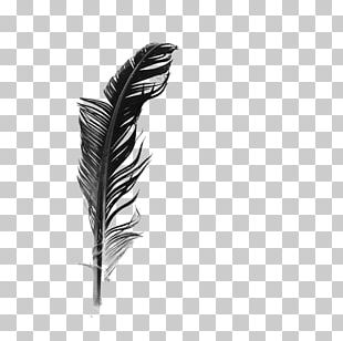 White Feather Black And White PNG