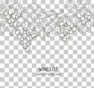 Wine Drawing Grape PNG