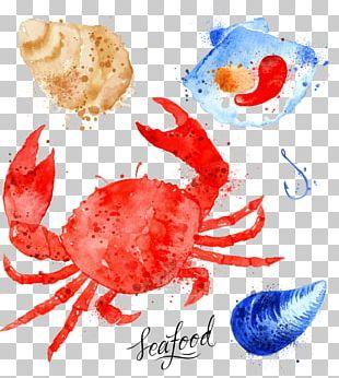 Crab Watercolor Painting Marine Biology Illustration PNG