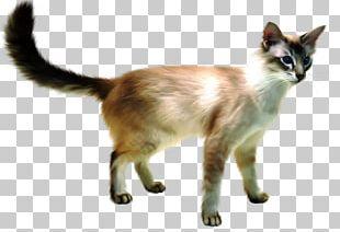 Javanese Cat Siamese Cat Balinese Cat British Shorthair Siberian Cat PNG