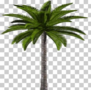 Asian Palmyra Palm Coconut Date Palm Leaf Flowerpot PNG