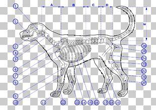 Dog Human Skeleton Bone Anatomy PNG
