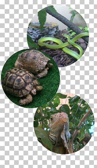Reptile Box Turtle Tortoise Pet Travel PNG