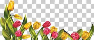 Spring Flower Free Content PNG