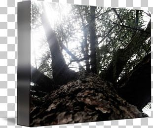 Wood Desktop Stock Photography /m/083vt PNG