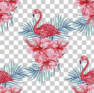 Flamingo Stock Illustration PNG