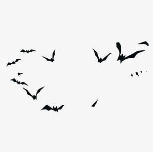 Cry Halloween Witch Silhouette Birds PNG