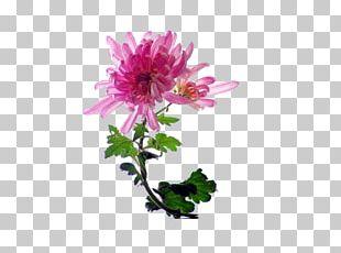Chrysanthemum Indicum Chrysanthemum Tea Cut Flowers PNG