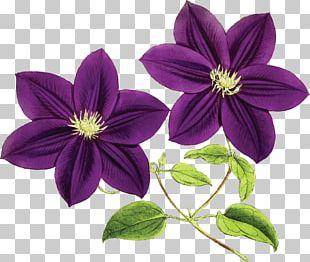 Purple Flower Violet Blue PNG