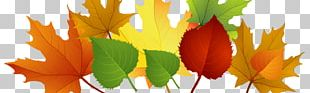 Autumn Leaf Color Borders And Frames PNG