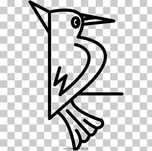 Woodpecker Bird Drawing Coloring Book Beak PNG