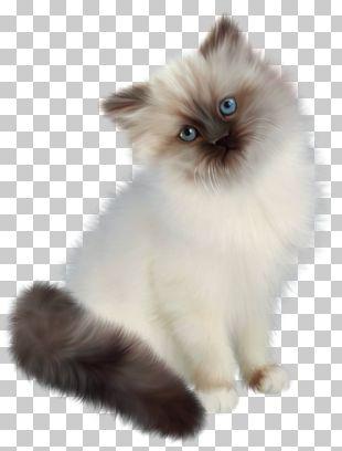 Persian Cat Ragdoll Siamese Cat Birman Kitten PNG