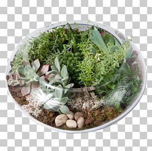 Flower Garden Lilium Plant PNG