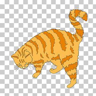Kitten Whiskers Tiger Tabby Cat Wildcat PNG