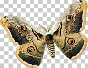 Butterfly Insect Royal Moths Wing PNG