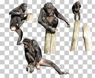 Primate Gorilla Bonobo Homo Sapiens Monkey PNG