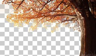 4K Resolution 1080p Autumn PNG