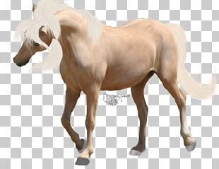 American Paint Horse Foal Mane Mustang Andalusian Horse PNG