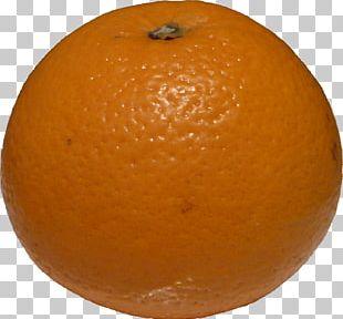 Blood Orange Tangerine Clementine Tangelo Mandarin Orange PNG