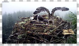 Bird Nest NEST+m Bird Of Prey PNG