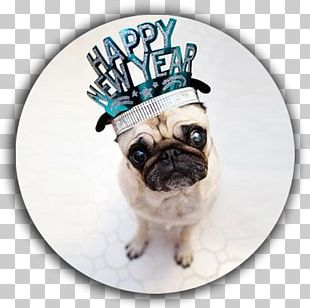 Pug New Year's Day Puppy New Year's Eve PNG