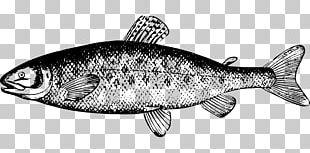 Chum Salmon Fish PNG