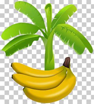 Banana Plantation Banana Leaf PNG