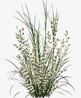 Grass Grass PNG