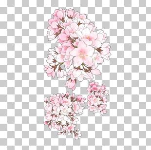 Pixiv Cherry Blossom Drawing Illustration PNG