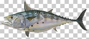 Little Tunny Albacore Tuna Fishing PNG
