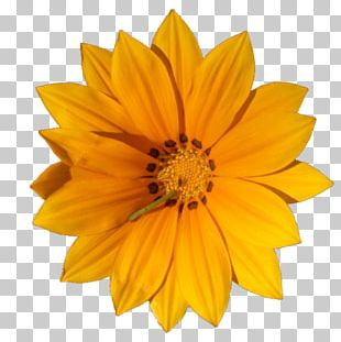 Flower Desktop Stock Photography PNG