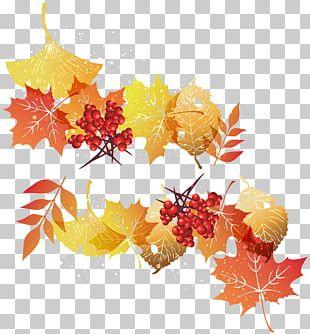 Maple Leaf Autumn Leaf Color PNG