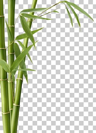 Bamboo Textile Bamboo Charcoal Leaf Fargesia Murielae PNG