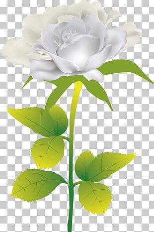 Beach Rose Flower PNG